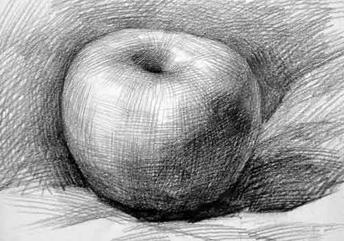 单个静物素描写生作品(瓜果蔬菜)