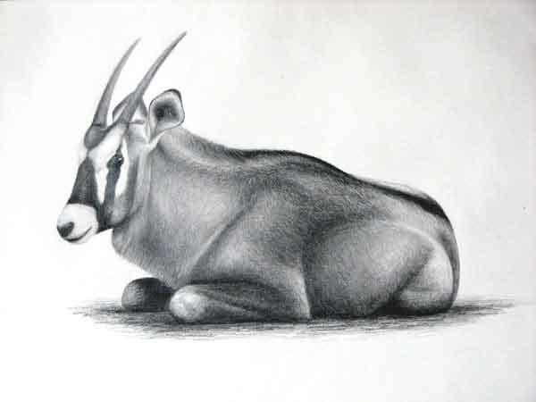 动物素描作品赏析