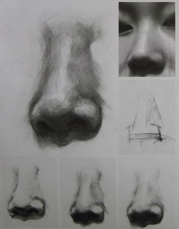 鼻子素描的结构图_素描头像鼻子结构_素描鼻子图