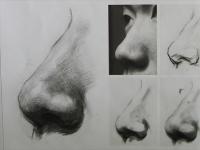 素描人物头像中鼻子的画法