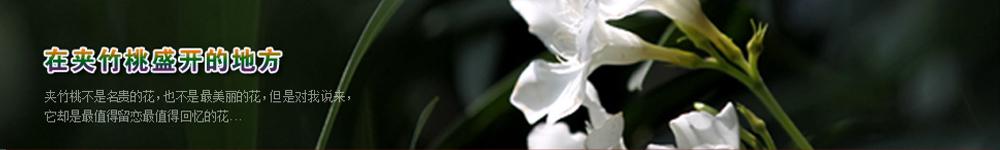 浙江大学招生网,浙江大学招生信息,艺术类招生简章,录取分数线,成绩查询