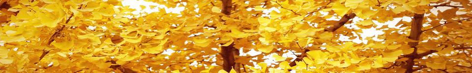 九江学院招生网,九江学院招生信息,艺术类招生简章,录取分数线,成绩查询