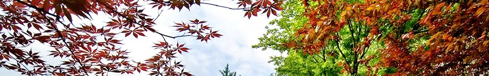 云南大学招生网,云南大学招生信息,艺术类招生简章,录取分数线,成绩查询