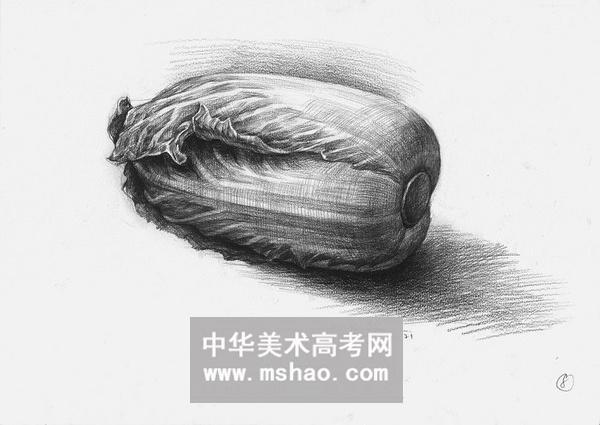 素描静物-一棵倒着的大白菜作品欣赏